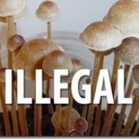 Illinois man charged with selling hallucinogenic mushrooms faces 20 years in prison