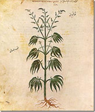 170px-Cannabissativadior